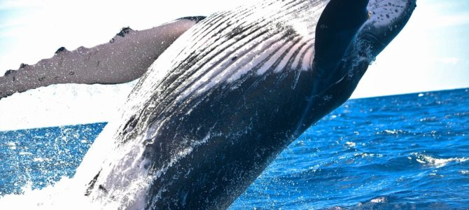 Whale Watching Adventure Guided by Experts from San Diego's Birch Aquarium