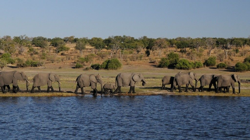 Chobe National Park Safari – Glamping in Botswana