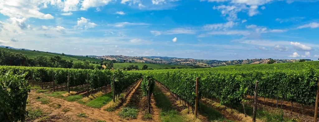 Tuscan Wine Tour in a Sightseeing Day Trip